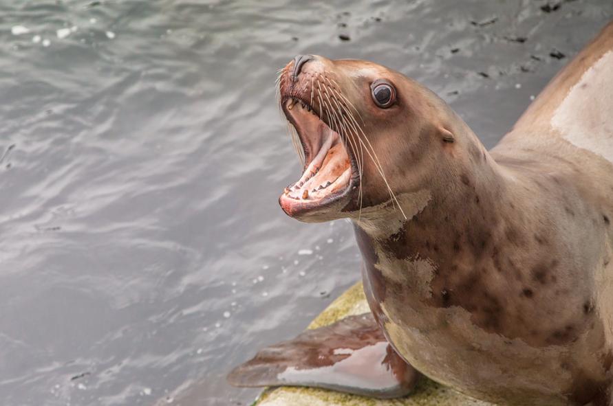 Seal Photo by Todd Paris